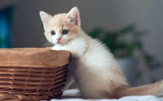кошки, source, guesthouse, февр,