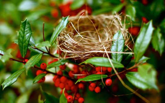 branch, дерево, nest, фаза, международный, детки, маленькие,