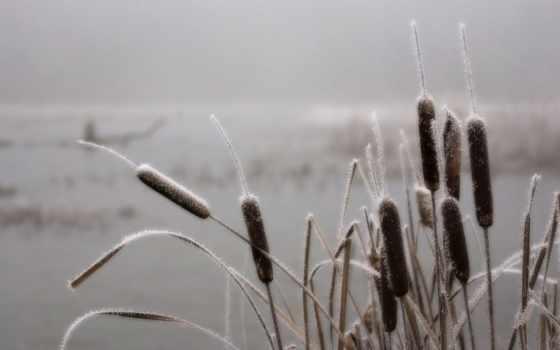 swamp, туман, иней, трава, камыш,