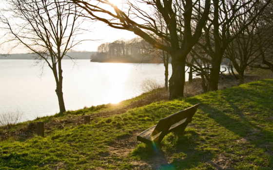 скамейка, природа, park, trees, озеро, побережье, landscapes,