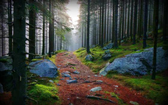 камни, лес