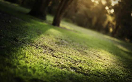 трава, макро, лето, природа, широкоформатные,