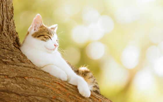мамия, сэйдзи, фотограф, seiji, кошек, кот, белый, японский,,