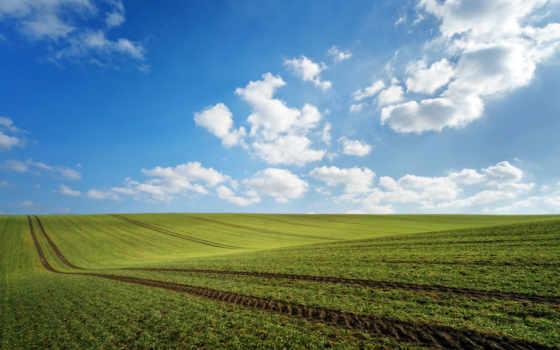 pole, vesna, oblaka, следы, зелень, нео,