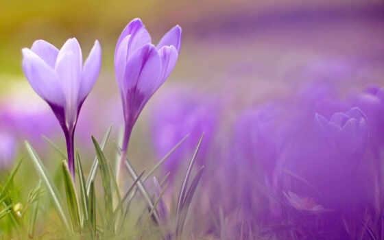 цветы, весенние, телефоны