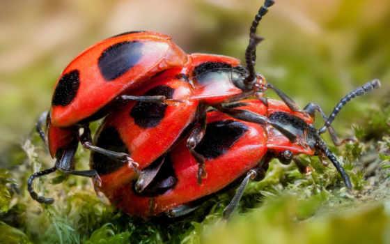 жуки, разные, самые, insects, страшные, pisces, una,