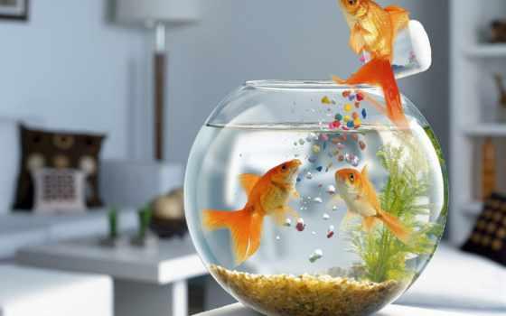 peces, que, los, necesitan, pinterest, oxígeno, pin,