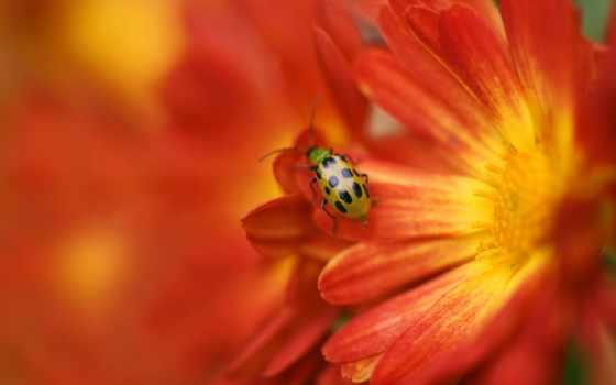 макро, edmiston, jacob, world, фотографа, цвета, насекомое, красивые, страница,