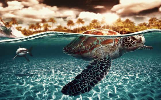 красивые, черепаха, нас, акула, высоком, сможете, rewalls, своими, zhivotnye, другими,