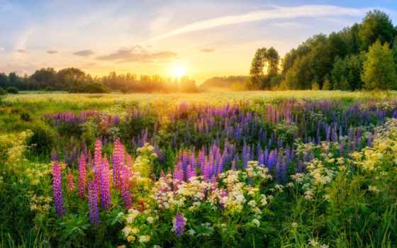 sun, cvety, summer, лес, trees, луга, россия, утро, martha, поляна,