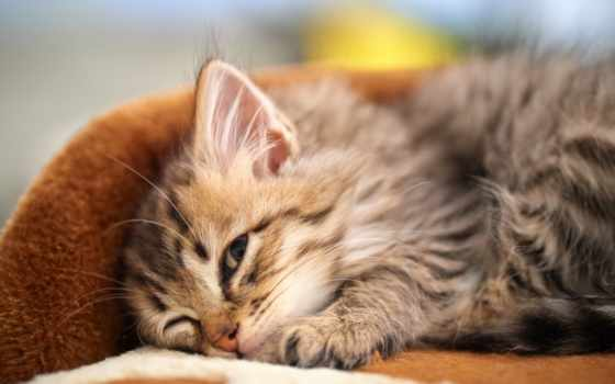 котята, котенок, спит, кот, спать, zhivotnye, смешные, коты, открытые,