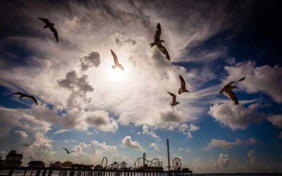 chmury, niebo, ptaki, tapety, ptak, morze, słońca, zdjęcie, zachód,