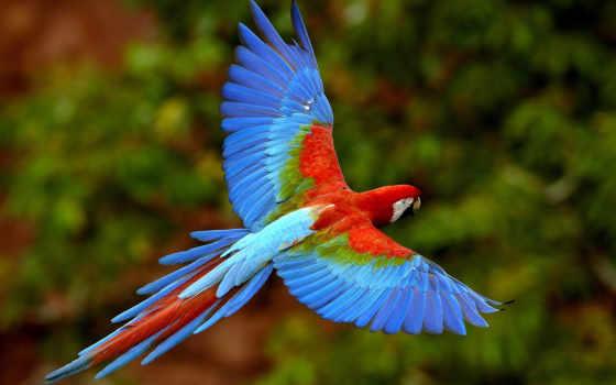 animali, попугаи, vertebrati, sono, попугай, gli, животных, neon, яndex, ди, монтсеррат,