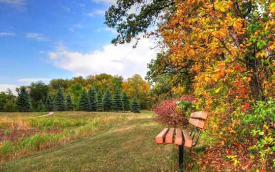 скамейка, осень, wooden