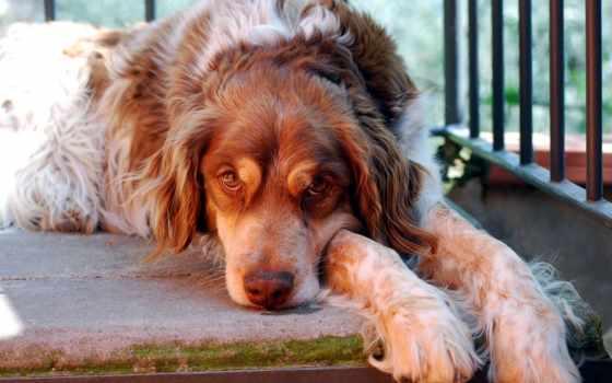 dogs, ремонт, ang, animal, картинка, собака, фото, планшетный, tags