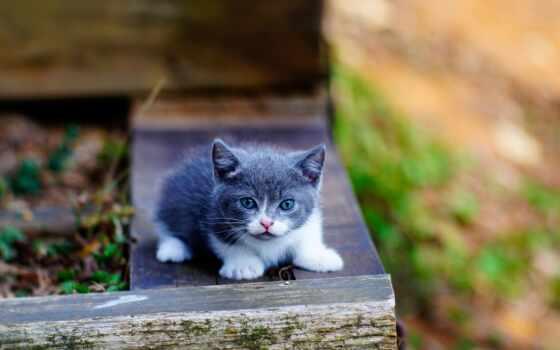 кот, little, котенок, blue, глаз, cute, серый