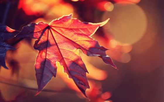 осень, free, природа