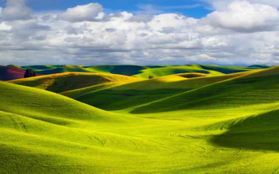 природа, трава, sun