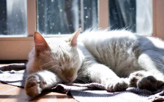 кот, тепло, спать