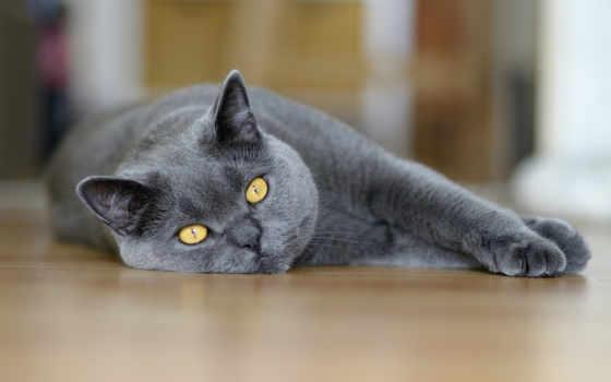 смешные, коты, кошки, котов, video, кошек, животных, пушистые, снимков,