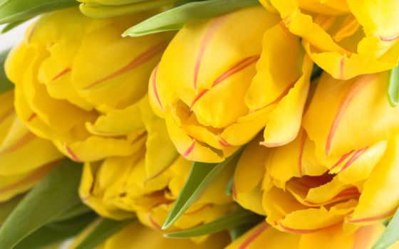 cvety, тюльпаны, many, весенние, бутон, телефона, yellow, букет, tape, герберы,