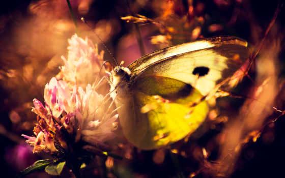 бабочка, макро, цветы