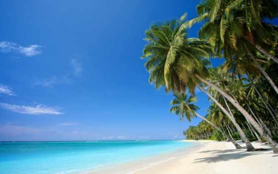 море, palm, tropic, пляж, песок