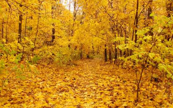 yellow, wallpaper, autumn, leaves, background, hd,