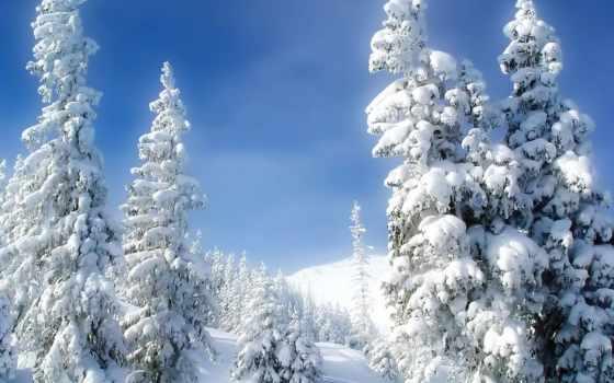 совершенно, снег, winter, холод, елки, снеегу,
