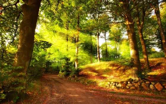 лес, природа, summer, солнечный, лучах, любая,