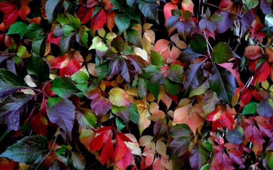 осень, кауни, природа