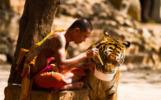 тигры, тигров, slave