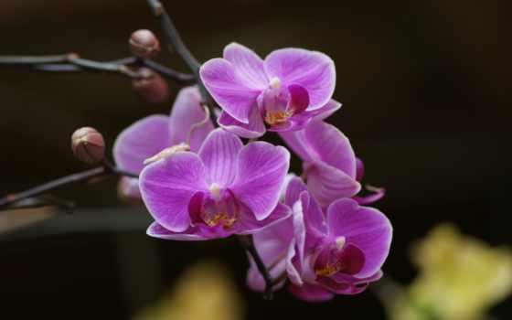 орхидеи, орхидея, обсуждение, liveinternet, дек, цветы, branch, веточка, прекрасные, но, russian,