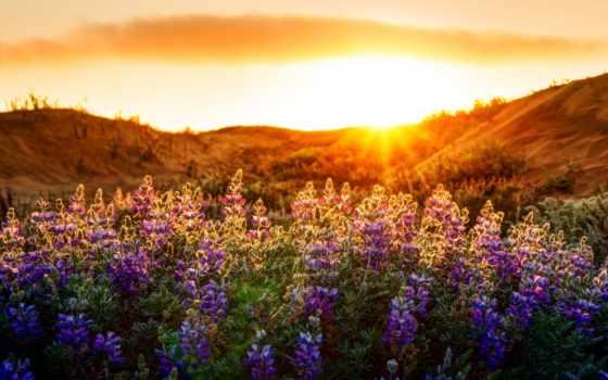cvety, природа, landscape, свет, другом, разрешений, картинку,