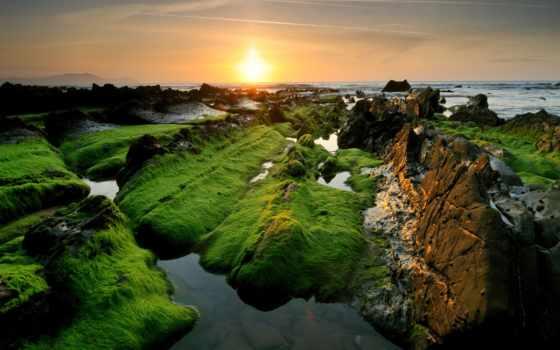 мох, preview, лес, трава, cvety, paisajes, природа, гладь, фотообои,