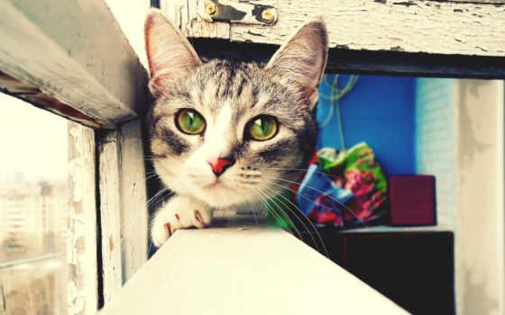 кот, красноярске, нервный, aiki, плечо, canvas,