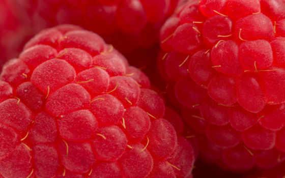 малина, красная, ягода