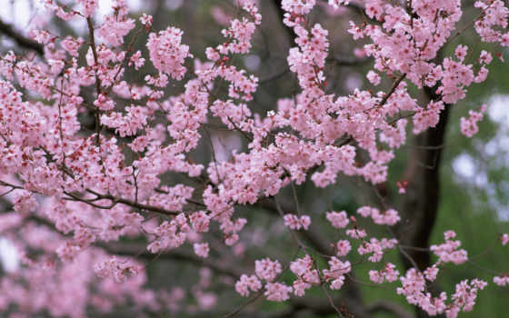 весна, природа, цветы Фон № 56350 разрешение 2560x1600