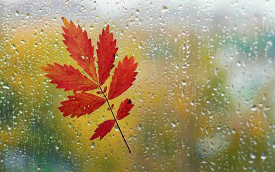 okno, дождь, капли, steklo, makro, листь,