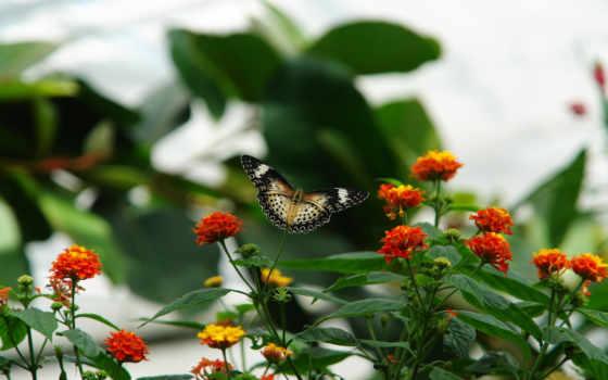 цветы, природа, pattern, бабочка, листья, мотылек, макро,