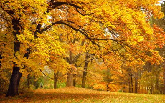 осень, trees, природа, park, листва, лес, желтые,