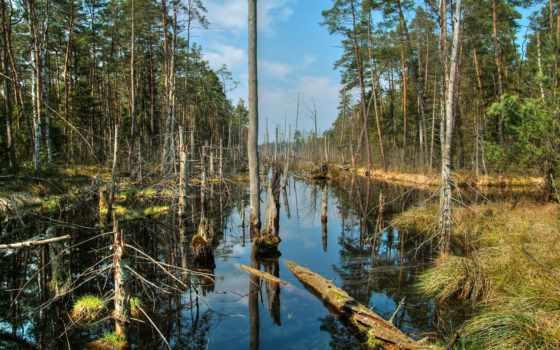dead, marshes, лес, природа, природные, rivers, собраны, раздаче, тысяч,