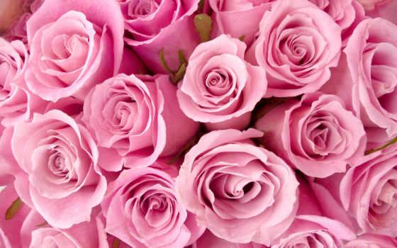 cvety, розовые, розы, фотообои, розовый, картинка, бутоны, роза, прекрасные,