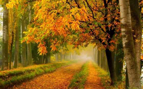 осень, коллекция, широкоформатные, туман, картинок, лучшая, desktopwallpape,