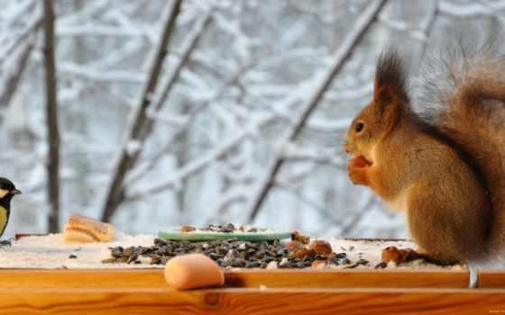 день, feeder, winter