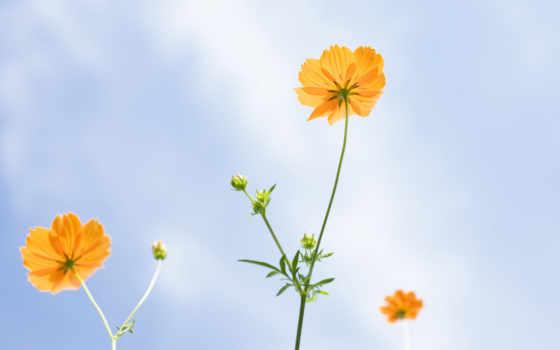 милых, krasota, cvety