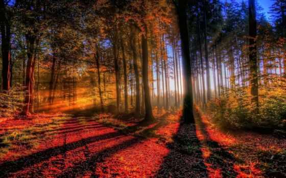 лес, закат, осень, trees, ipad, свет, природа, мини,