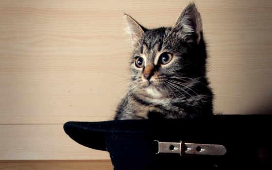 кот, шляпе, сидит, черной,