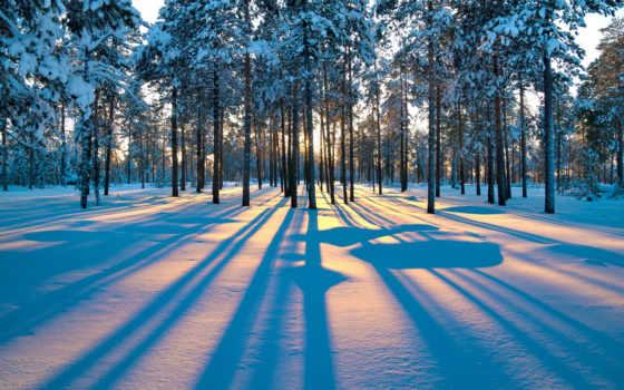 лес, winter, зимнем, лесу, тени, crystal, деревьев, зимние,