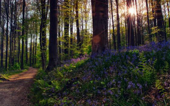 flowers, лес, свет, sun, rays, яndex, природа, пользователя, cvety,